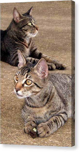 Two Tabby Cats Canvas Print by Nicole I Hamilton