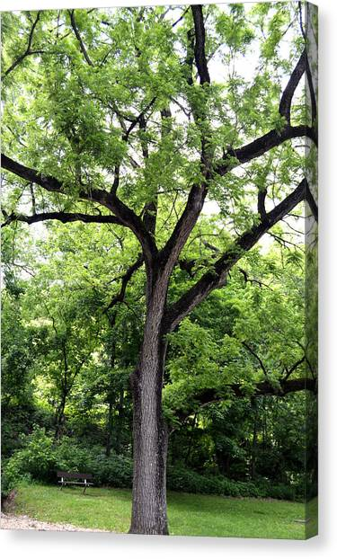 Two Tone Tree Canvas Print