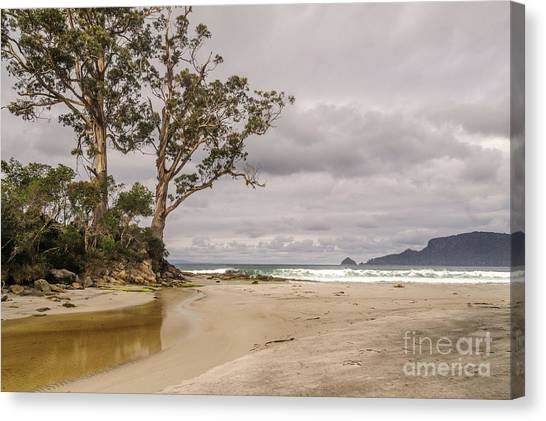 Two Tree Point Canvas Print