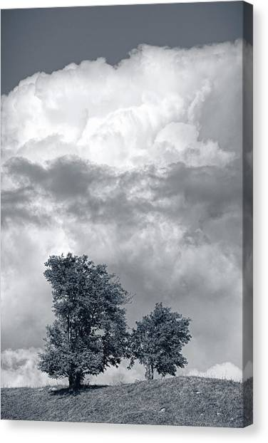 Two Trees #9249 Canvas Print