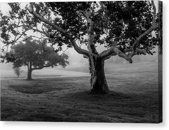 Two Trees Colt State Park Canvas Print