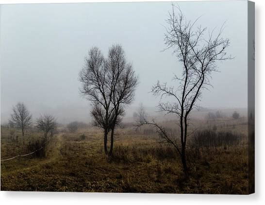 Two Trees In The Fog Canvas Print