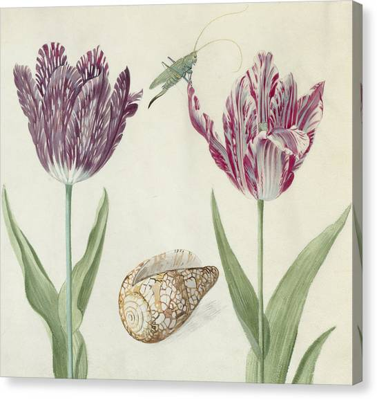 Grasshoppers Canvas Print - Two Tulips A Shell And A Grasshopper by Jacob Marrel