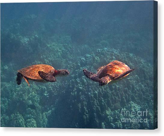 Two Turtle Tango Canvas Print