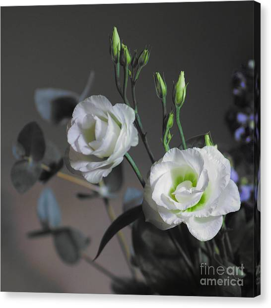Canvas Print featuring the photograph Two White Roses by Jeremy Hayden