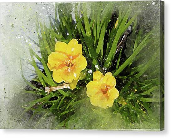 Two Yellow Beauties-2 Canvas Print