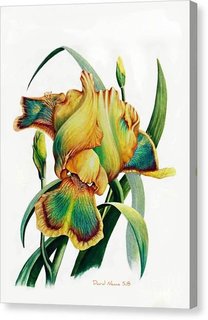 Tye Dyed Canvas Print