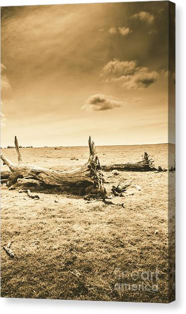 Fallen Tree Canvas Print - Typical Tasmania by Jorgo Photography - Wall Art Gallery