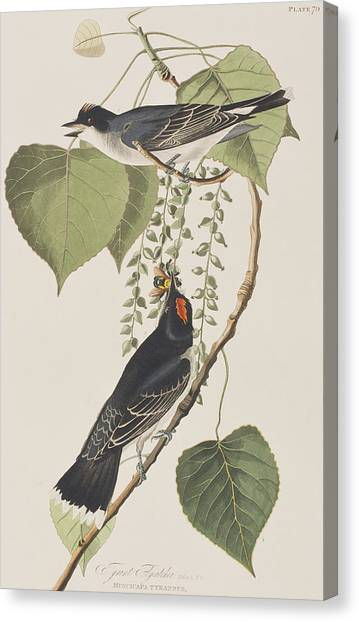 Flycatchers Canvas Print - Tyrant Fly Catcher by John James Audubon