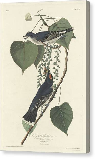 Flycatchers Canvas Print - Tyrant Flycatcher by Dreyer Wildlife Print Collections