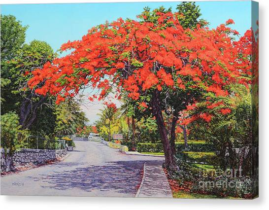 Ubs Poinciana Canvas Print