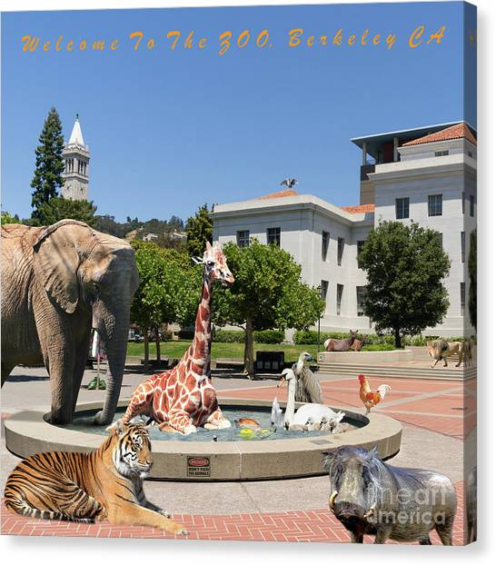 Uc Berkeley Canvas Print - Uc Berkeley Welcomes You To The Zoo Please Do Not Feed The Animals Square And Text by Wingsdomain Art and Photography