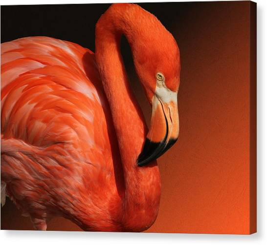 Ultimate Orange Canvas Print