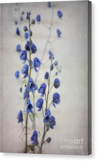 Yukon Canvas Print - Ultramarine  by Priska Wettstein