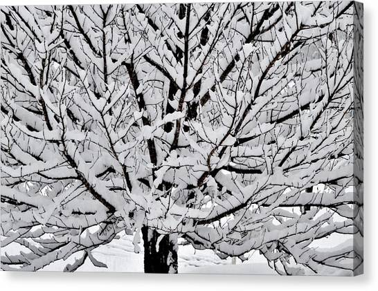 Unbelievable Tree Canvas Print