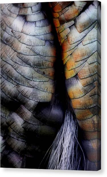 Uncle Tom's Gobbler N'all....  Canvas Print