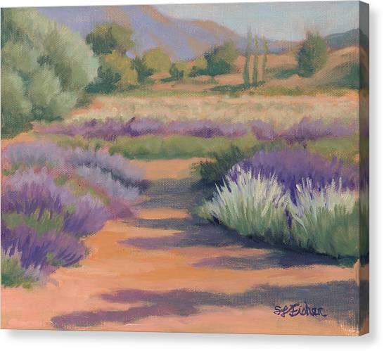 Under A Summer Sun In Lavender Fields Canvas Print