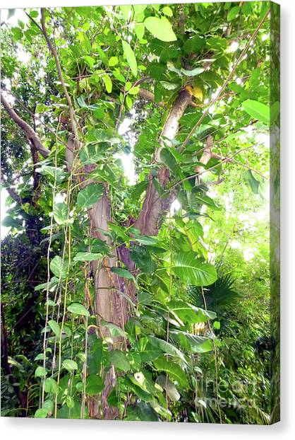 Canvas Print - Under A Tropical Tree With Vines by Francesca Mackenney