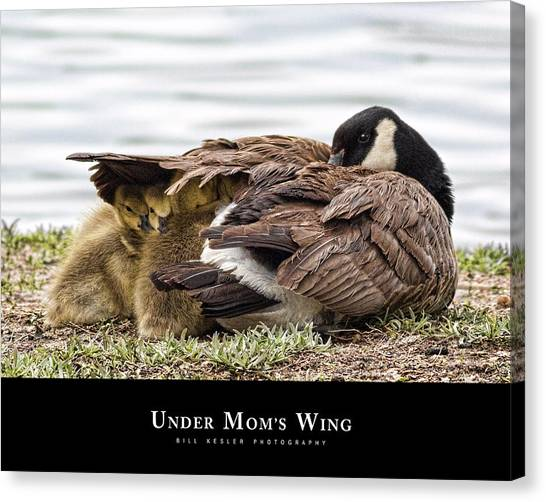 Under Mom's Wing Canvas Print