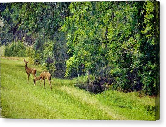 Okefenokee Canvas Print - Under Soft Summer Light by Jan Amiss Photography