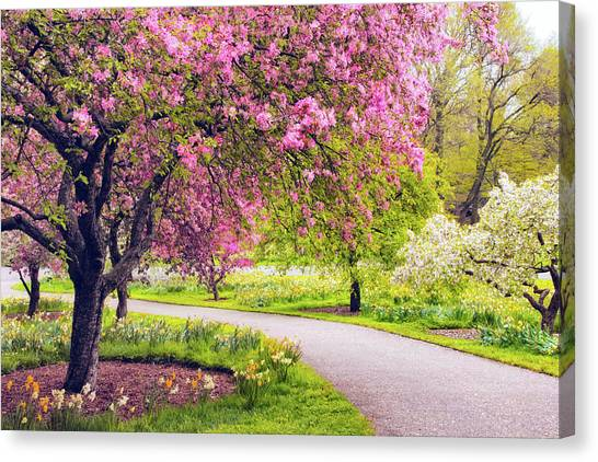Tree Blossoms Canvas Print - Under The Apple Tree by Jessica Jenney