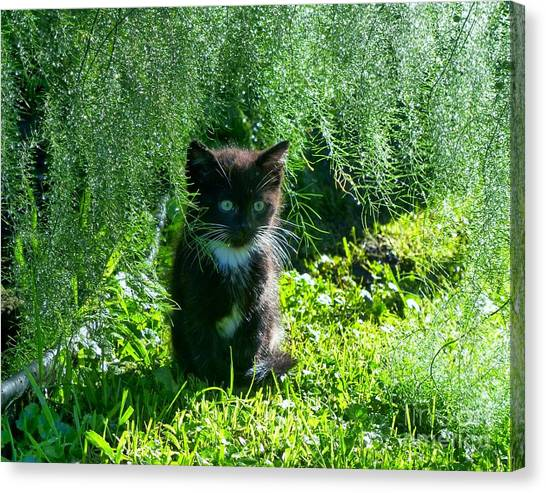 Kitten Under The Asparagus Ferns Canvas Print