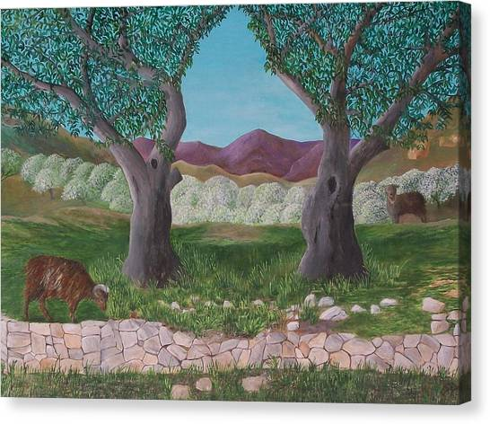 Under The Olive Trees Canvas Print
