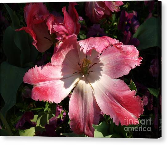 Under The Shadow Canvas Print by Judy  Waller