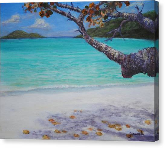 Under The Tree At Magen's Bay Canvas Print