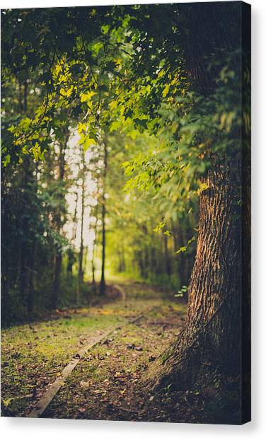Forest Paths Canvas Print - Under The Tree by Shane Holsclaw