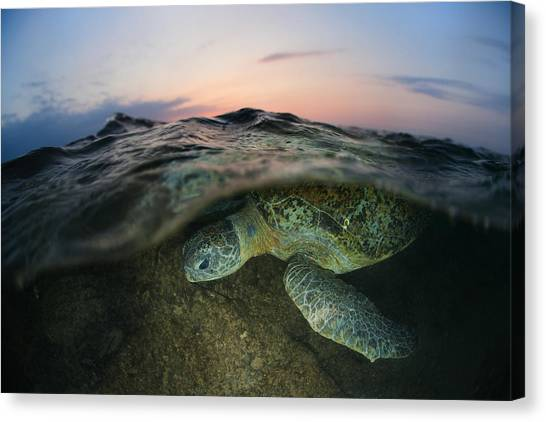 Ocean Sunsets Canvas Print - Under The Wave by Andrey Narchuk