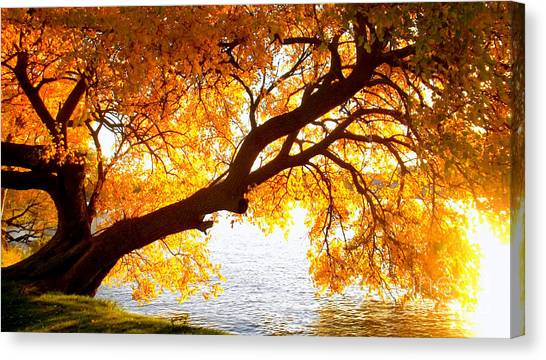 Canvas Print featuring the photograph Under The Yellow Tree by Viviana  Nadowski
