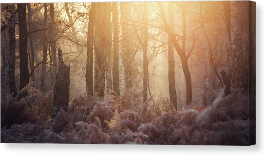 Sherwood Forest Canvas Print - Undergrowth by Chris Dale