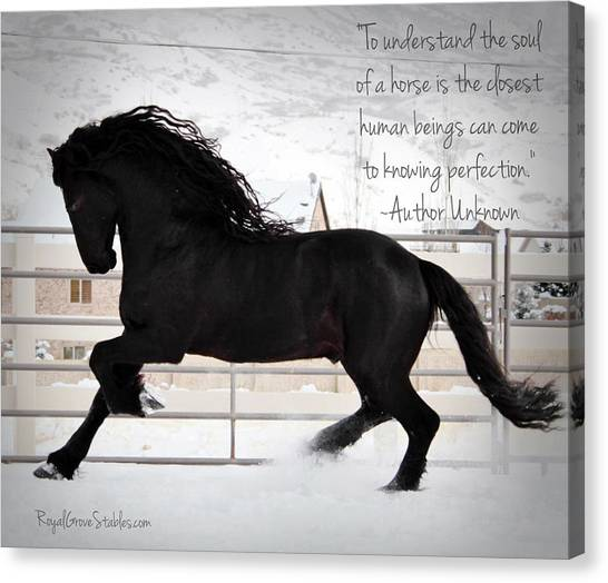 Understand The Soul Of A Horse Canvas Print