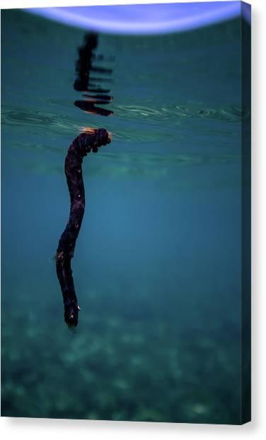 Underwater Branch Canvas Print