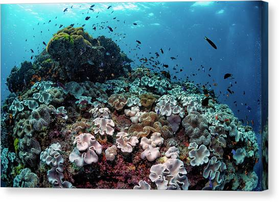 Coral Reefs Canvas Print - Underwater Community by Shane Linke