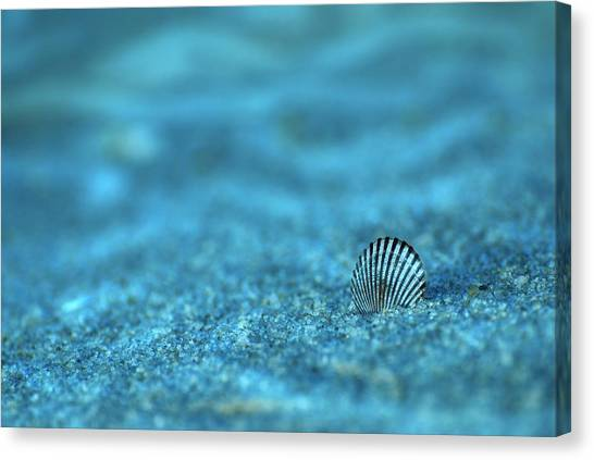 Underwater Seashell - Jersey Shore Canvas Print