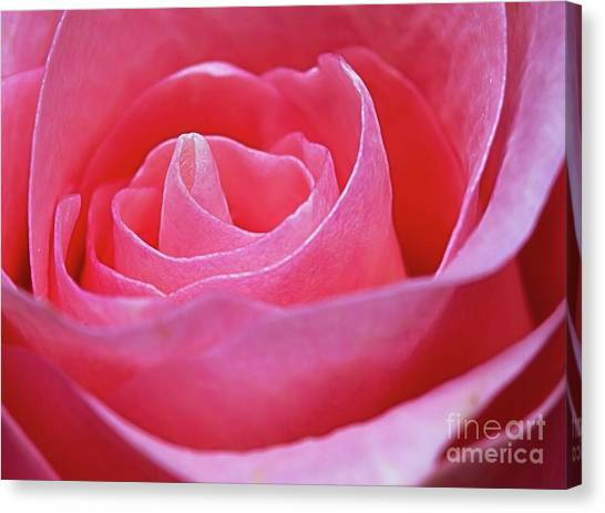 Canvas Print featuring the photograph Unfurl by Ray Shiu