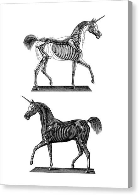 Anatomy Canvas Print - Unicorn Anatomy by Madame Memento