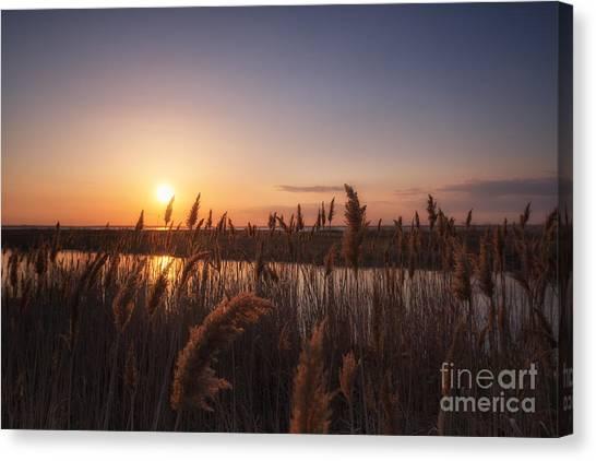 Marsh Grass Canvas Print - Union Beach Sunset  by Michael Ver Sprill