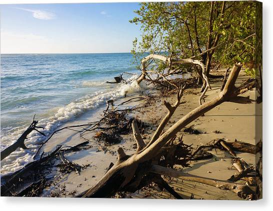 The Unspoiled Beaty Of Barefoot Beach Preserve In Naples, Fl Canvas Print