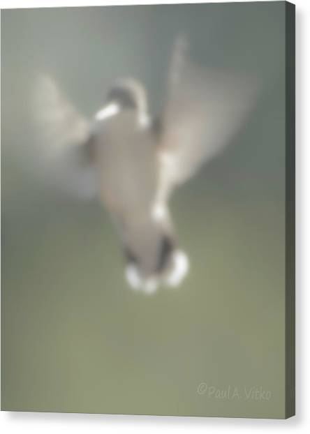 Untitled Hummingbird Canvas Print