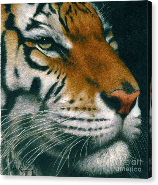 Untitled Tiger Canvas Print by Brad Carraway