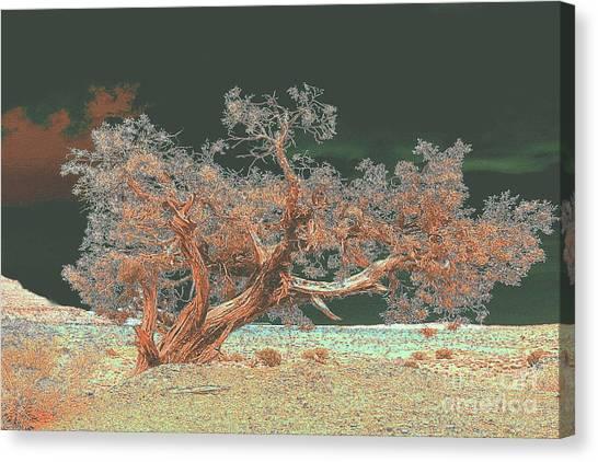Unusual Tree Canvas Print