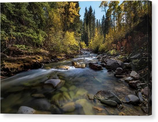 Up A Colorado Creek Canvas Print