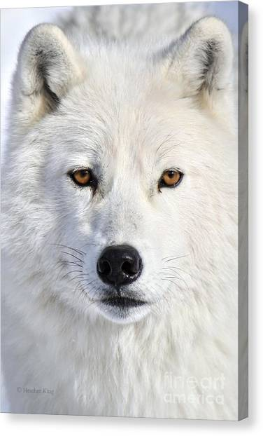 Arctic Wolf Canvas Print - Up Close And Personal by Heather King