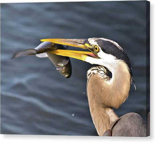 Up Close Catch Canvas Print