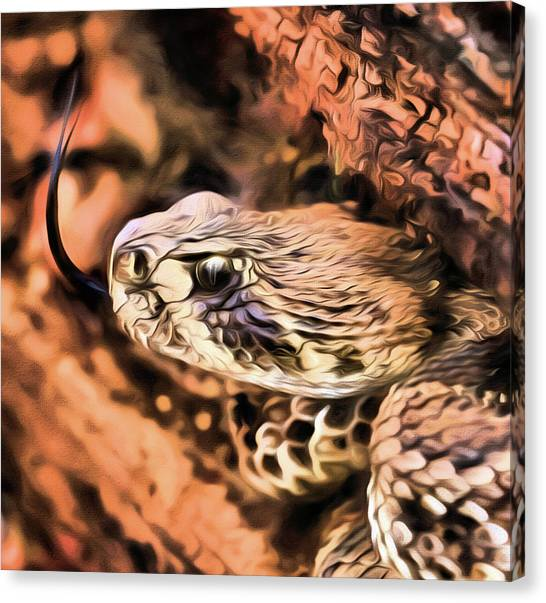 Poisonous Snakes Canvas Print - Up Close With An Atrox by JC Findley