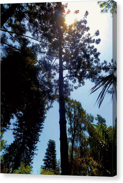 Up In The Sky Trees Canvas Print