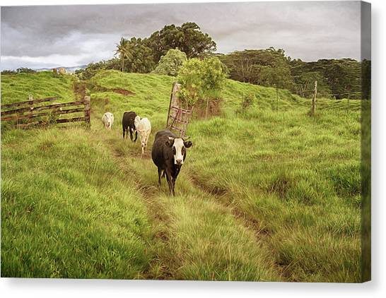Upcountry Ranch Canvas Print